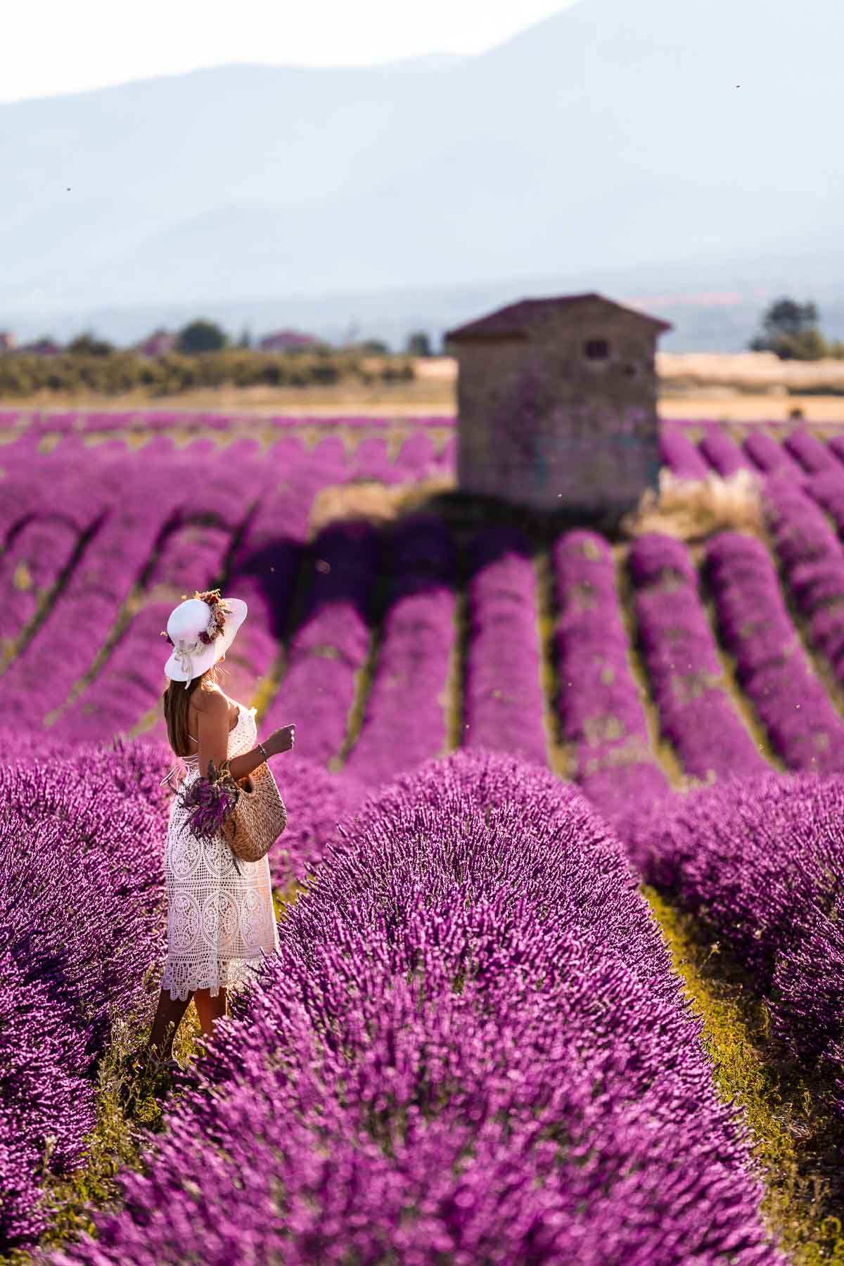 Girl in a white dress standing in the lavender fields in Provence, France