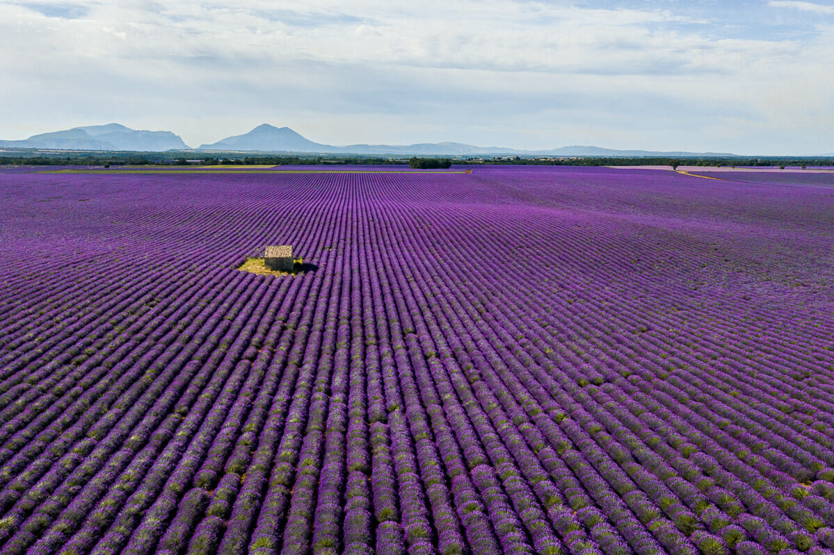 Aerial view of the lavender fields in Provence, France