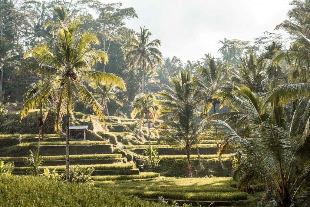 Sunrise at Tegallalang Rice Terraces, Bali
