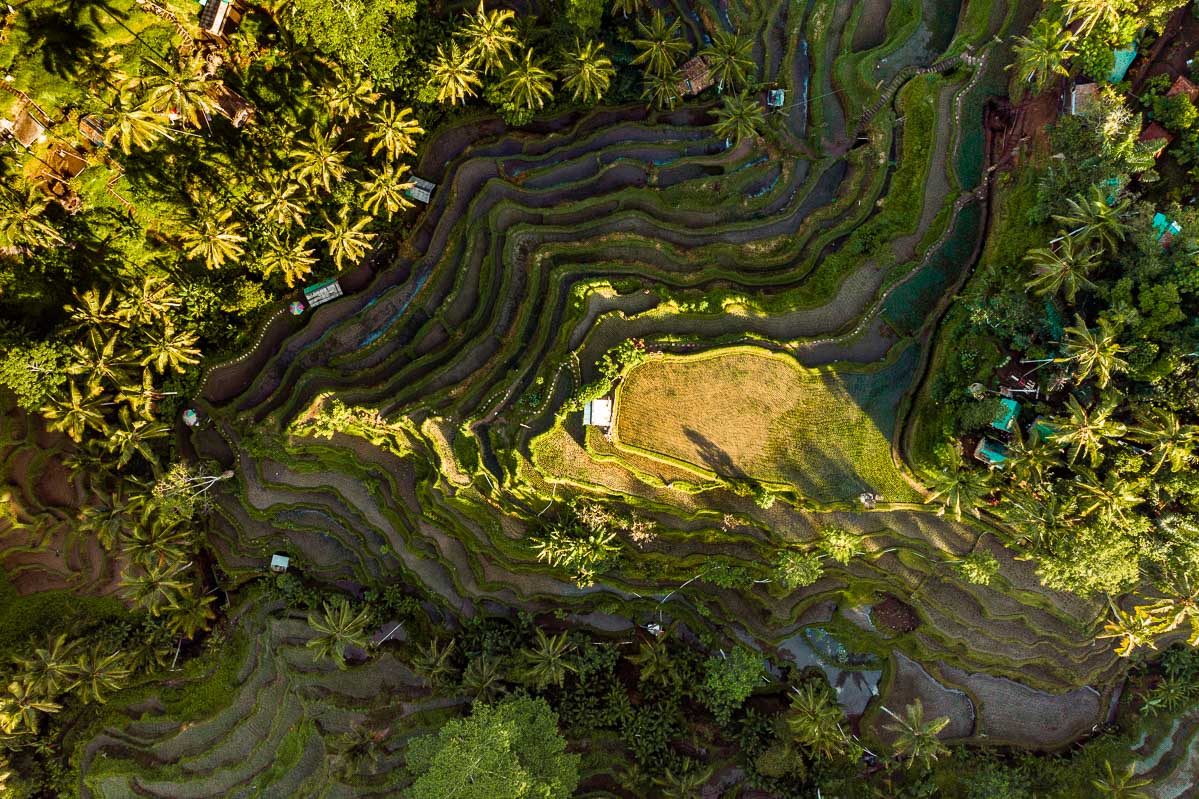 Aerial view of the Tegallalang Rice Terraces in Bali