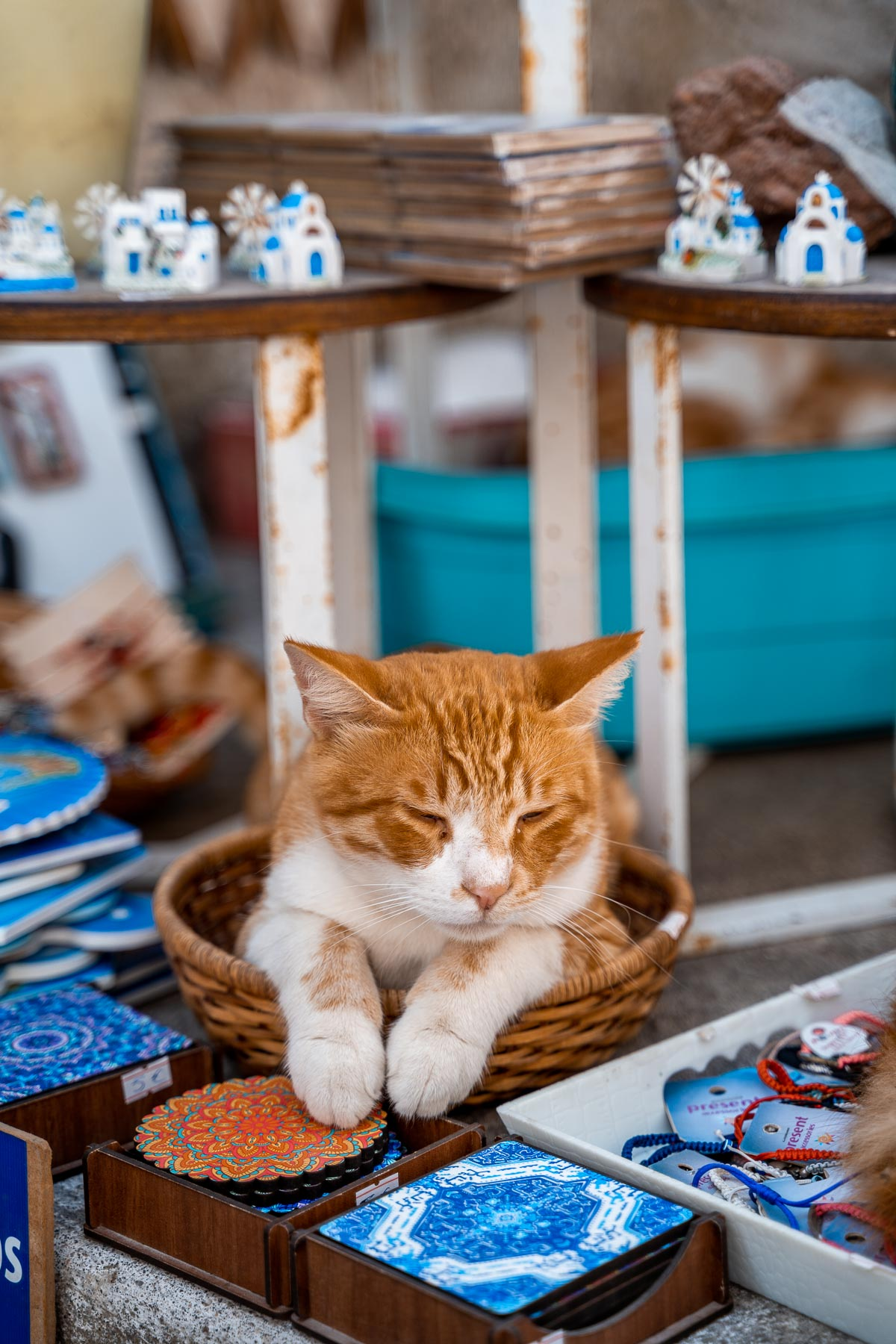 Cat sleeping on top of the souvenirs in Pyrgos, Greece