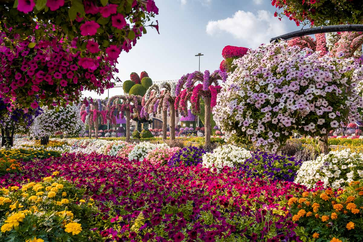 Flowers in the Dubai Miracle Garden