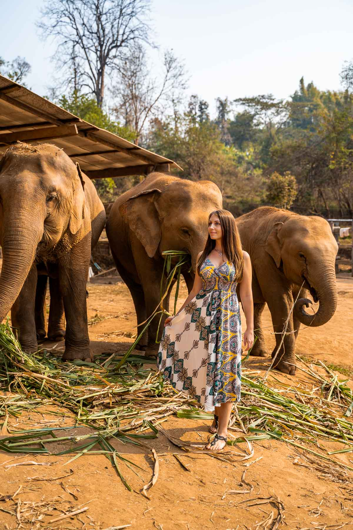 Girl standing in front of three elephants at Elephant Jungle Sanctuary Chiang Mai