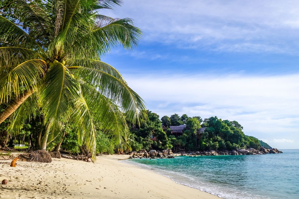 White sandy beach with palm trees in Koh Lipe, Thailand